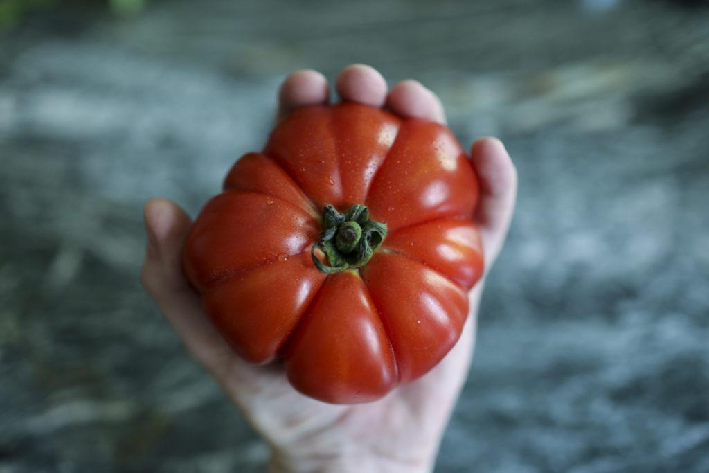 Ochsenherz Tomate